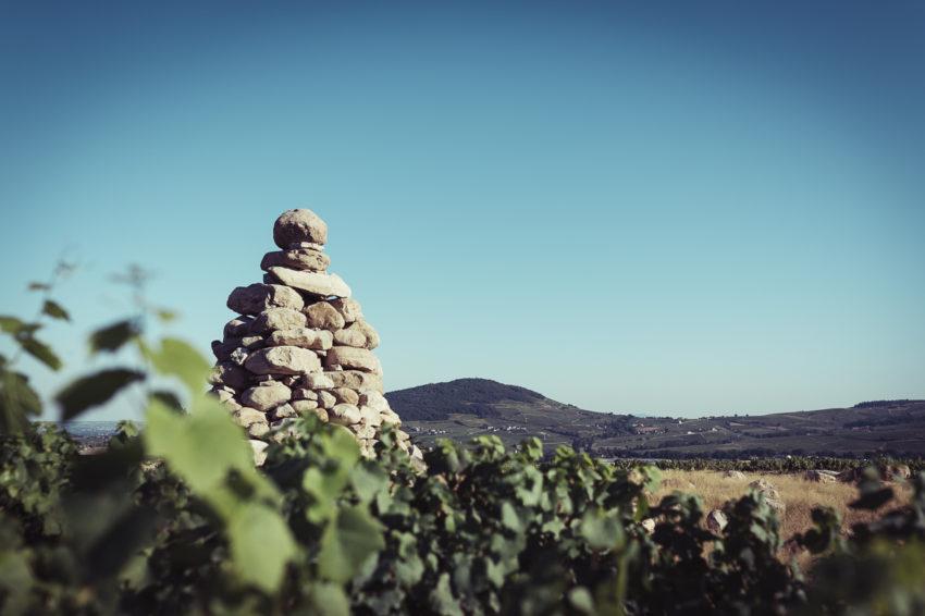Vin Sauvage à Poil